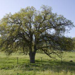 Protect Your Trees: Invasive Shothole Borer Beetle Training